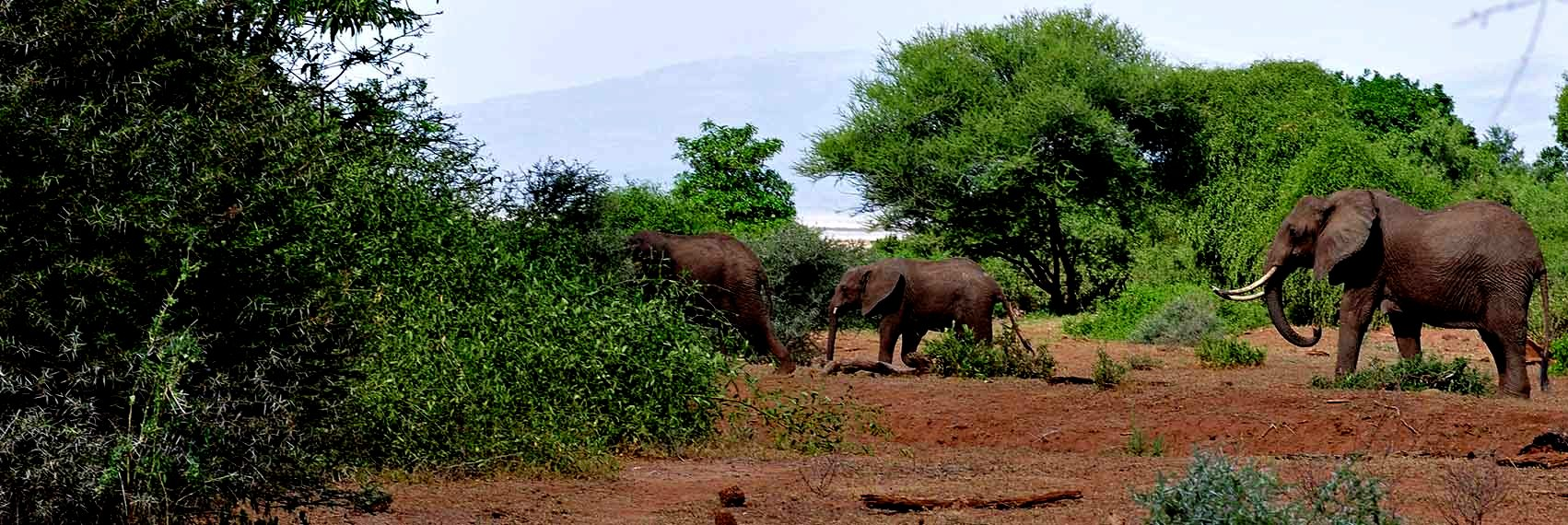 Arusha National Park Walking Tour