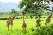 Arusha National Park Safaris