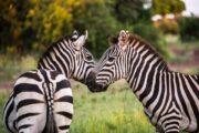 Arusha National Park activities