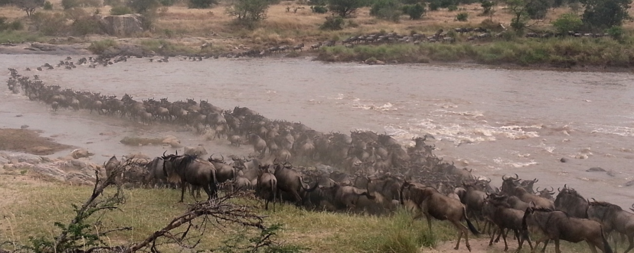 Great migration Crossing
