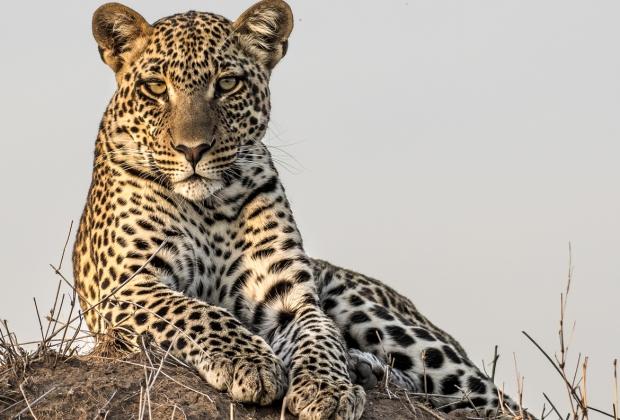 Leopard Tours and safaris Tanzania