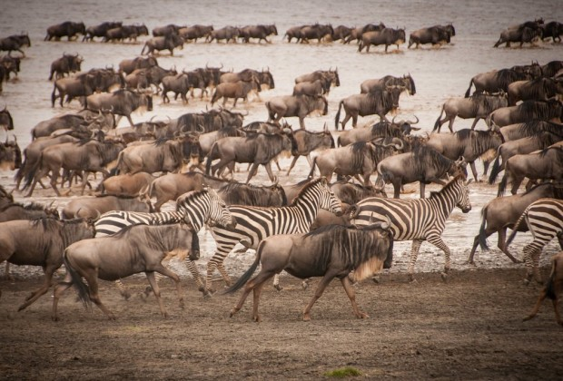 wildlife in Seregeti