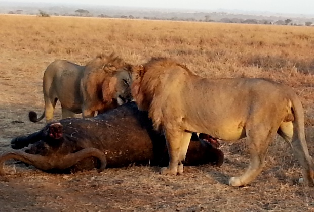 africa safaris packages