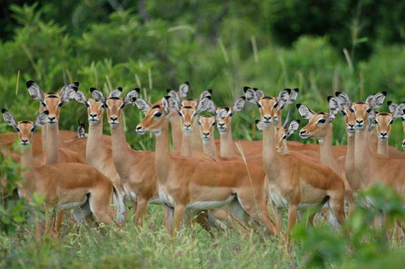 IBANDA KYERWA NATIONAL PARK