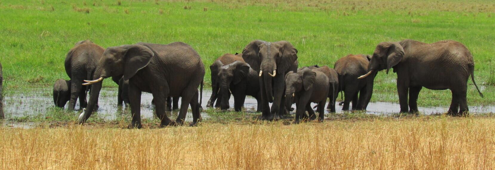 About Kiwoito Africa Safaris
