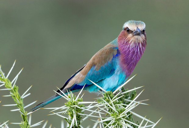 tanzania bird watching