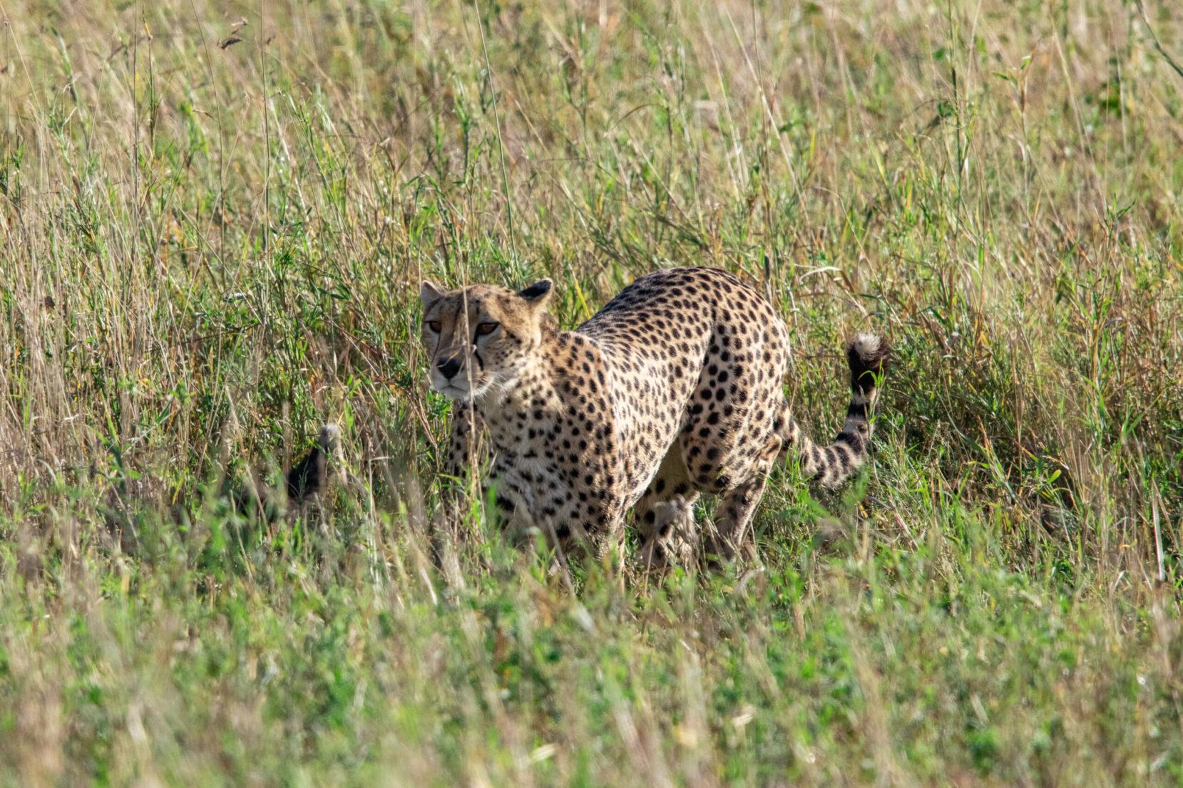 tanzania cheap safari packages