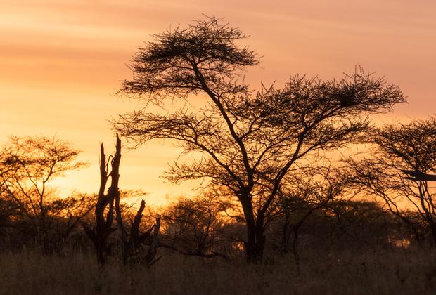 BEST WILDLIFE SAFARI IN TANZANIA